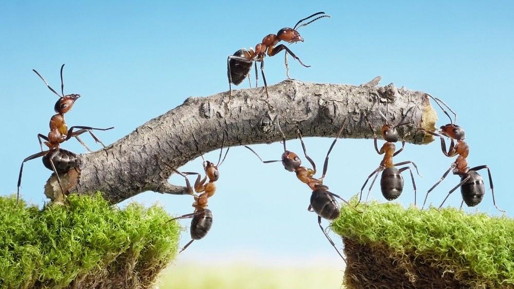 WEB Ants teamwork-056401-edited
